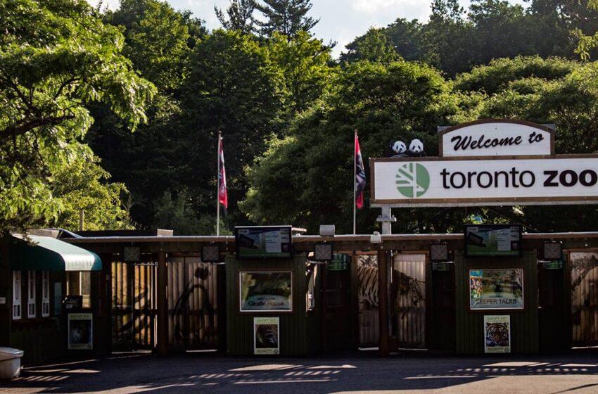 برنامه مجازی باغ وحش تورنتو