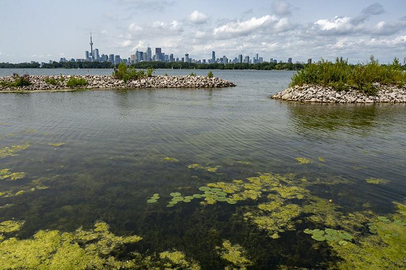 برترین پارک های تورنتو