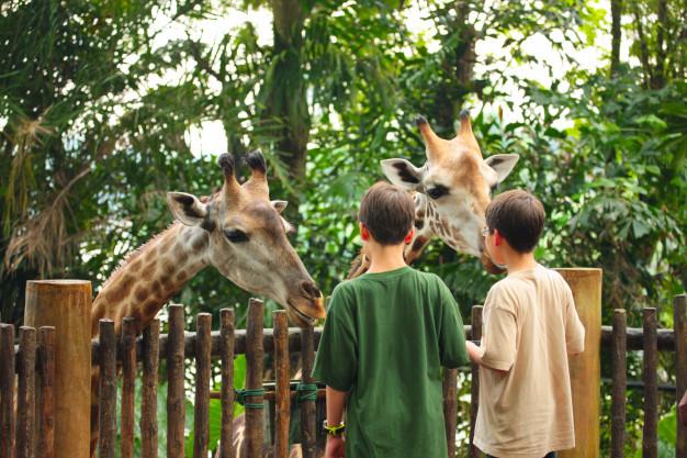 معرفی باغ وحش تورنتو