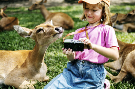 Young caucasian girl taking selfie with deers at the zoo