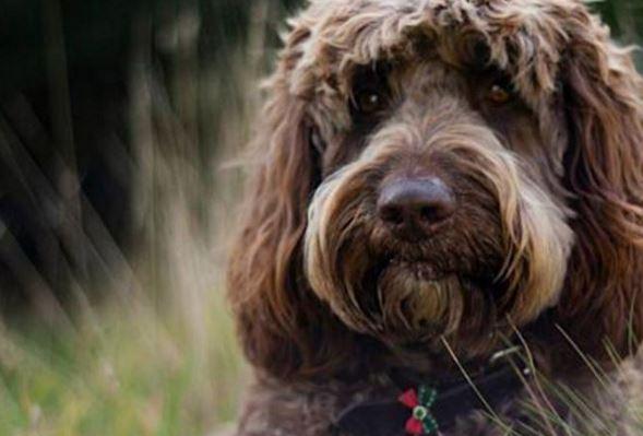 """سگی به نام """"دیگبی"""" زنی را از تصمیم به خودکشی منصرف کرد."""